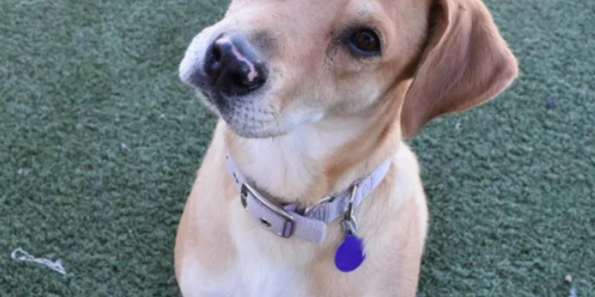2 de cada 6 perros de rescate locales entrenan para convertirse en perros de servicio