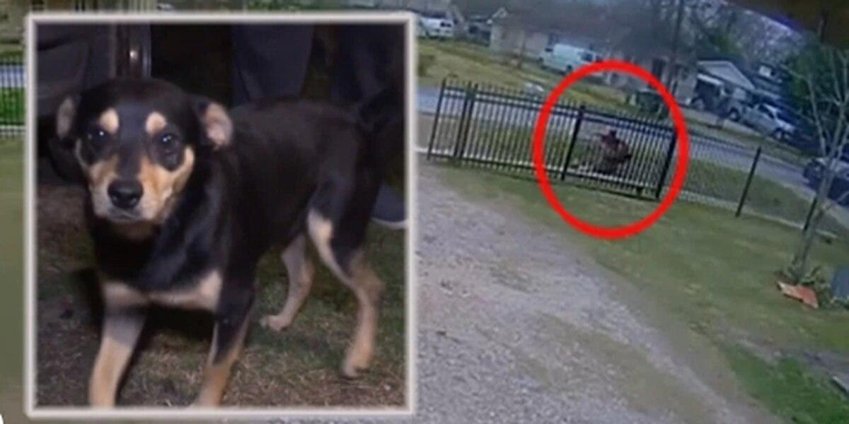 Héroe canino: perrito evita cuantioso robo a su dueño