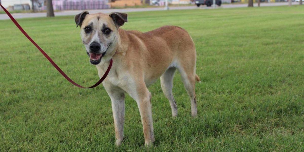 Más de 140 perros serán sacrificados debido a un brote de moquillo en el refugio de control de animales de Odessa
