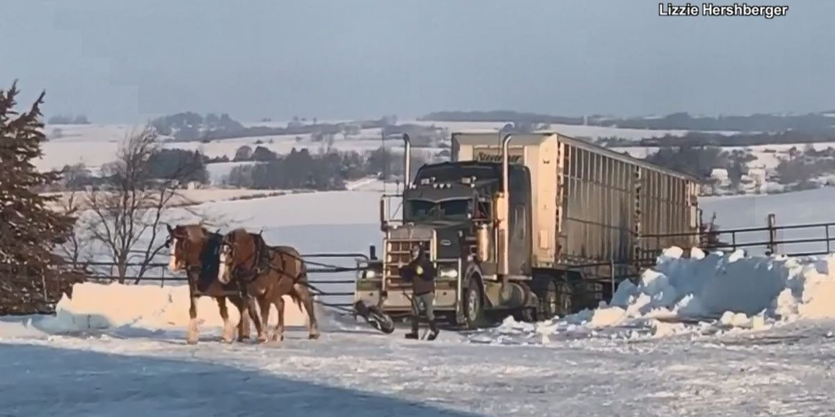 Watch: Pair of horses pull tractor trailer up icy hill